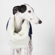 abrigo-galgo-tejano-06