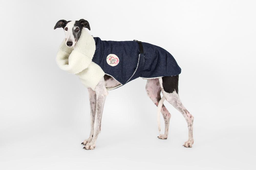 abrigo-galgo-tejano-08